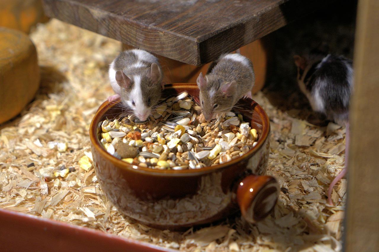 Gute Tiernahrung von Bozita für Hund und Katz